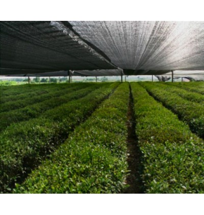 90% Sun Cover Orchid Thailand Plantation Mesh Net Height 1.8M x 1FT Dimension